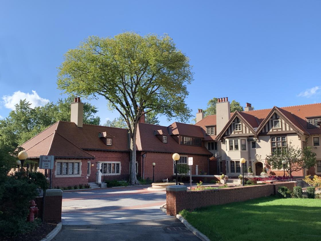 Elm tree in Cranbrook House Courtyard
