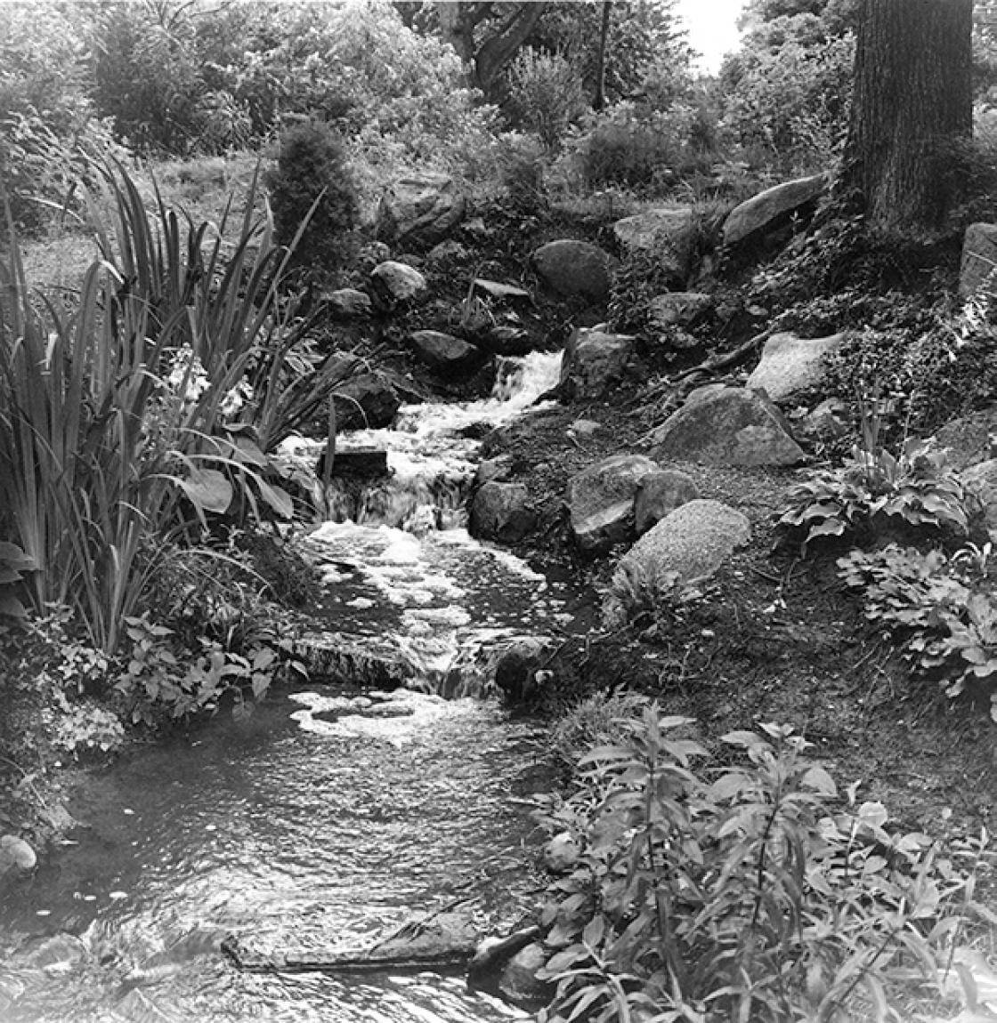 Photograph of the rebuilt Lily Pond Cascade with Hosta Collection, 1976.