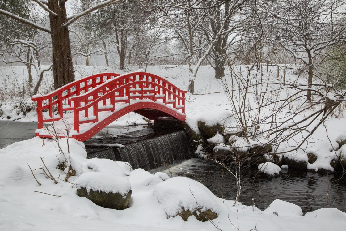 Japanese Bridge in winter
