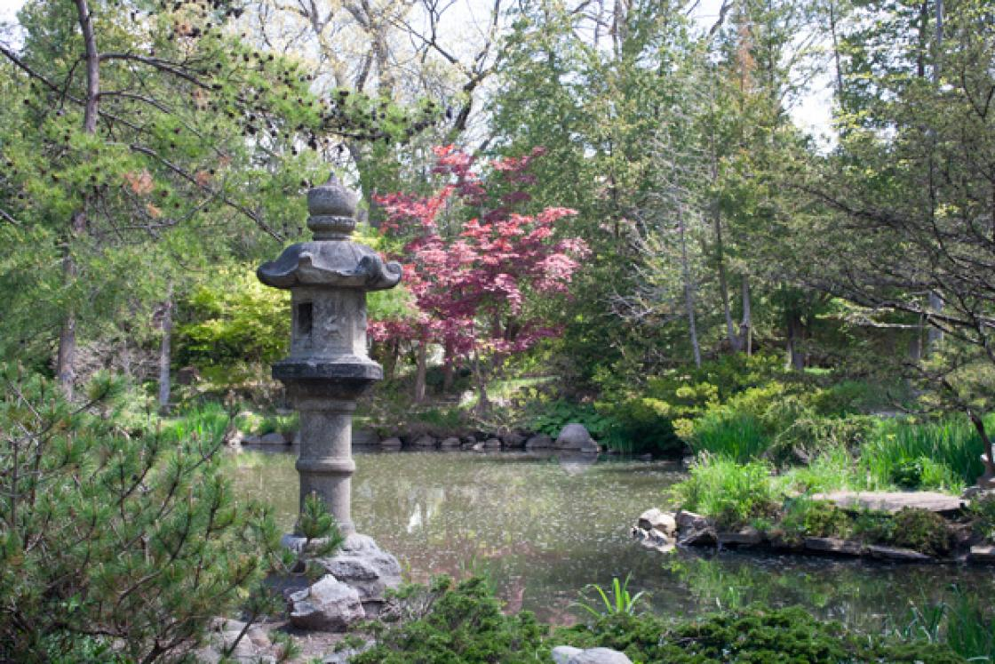 Photograph of the kasuga lantern in the Japanese Garden at Cranbrook House & Garden, May 2017. Photograph by Tom Booth.
